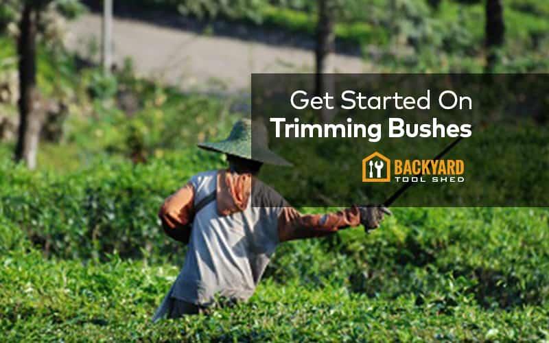 start trimming bushes